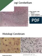 Histologi Cerebellum