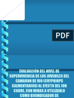 Evaluación Del Nivel de Supervivencia de Los Juveniles Del Camaron de Rio (Cryphiops Caementarius) Al Efecto Del Ion Cobre, Con Miras a Utilizarlo Como Bioindicador de Contaminación Por Cobre