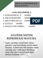 Anatomi Dan Fisiologi Sistem Reproduksi Wanita Dan Pria