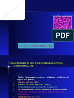 6. Genero Campylobacter 2007 Zoraida.