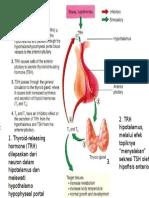 Hormon Tiroid