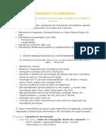 MERIDIANOS SECUNDÁRIOS.docx