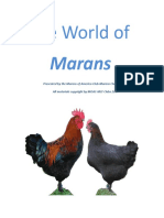 the world of marans