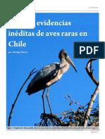 Algunas evidencias ineditas de aves rarras en Chile
