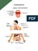 Digestivo Urinario Nervioso quechua
