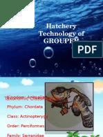 hatcherytechnologyofgrouper-131012041442-phpapp01