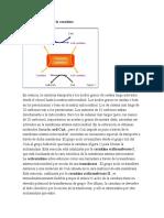 Función biológica de la carnitina.docx