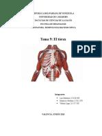Anatomía Informe TEMA 9. Bioanalisis UC