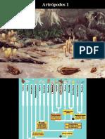 12 - Artrópodos 1.pdf