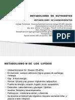 Metabolismo de Nutrientes
