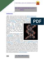 ADN Y ARN.docx