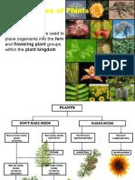 Y10 Unit 1-5 Plant Classification 2015