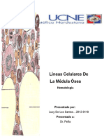 Linéas hematopoyéticas de la Médula ósea.docx