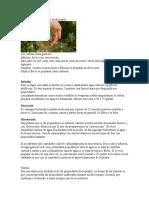Cómo preparar las plantas medicinales.doc