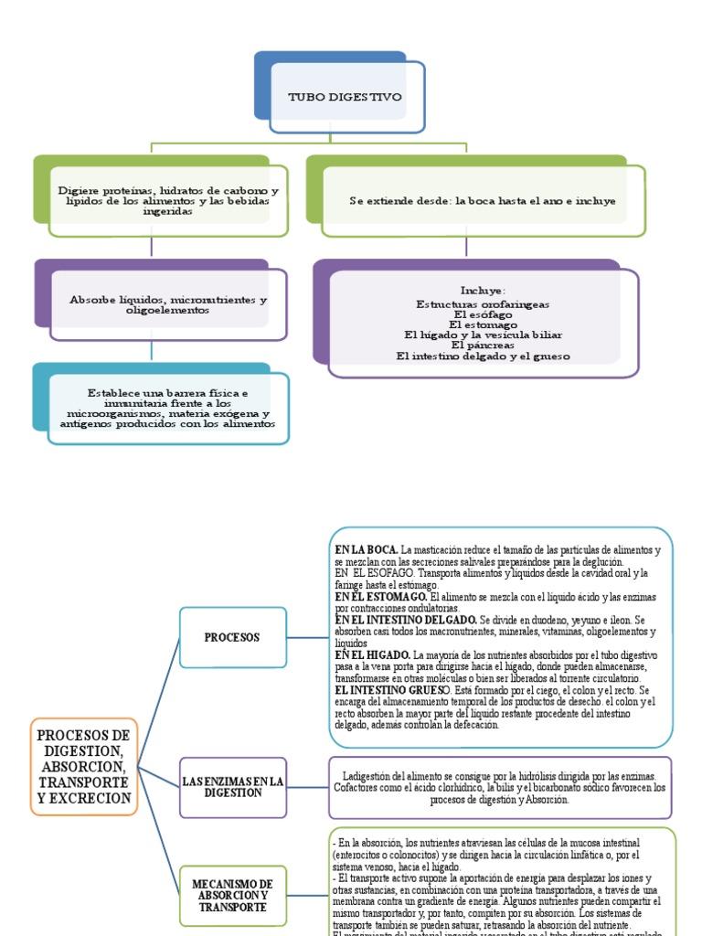 El Tubo Digestivo Mapa Conceptual