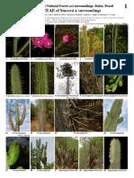 100 Samen Seeds Rhipsalis,Epiphyllum Col Pseudorhipsalis ramulosa Quindio