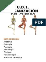 organizacion del cuerpo humano