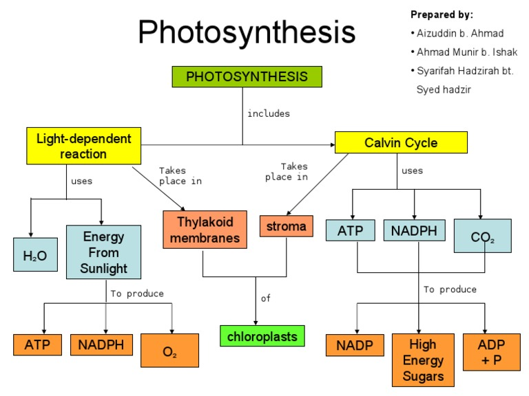 Concept Map Photosynthesis Photosynthesis Biotechnology