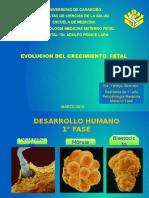 Evolucion Del Crecimiento Fetal