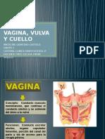 Vulva Vagina Cervix