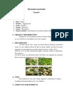 Myrcianthes myrsinoides