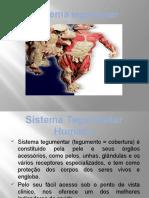 Sistema Tegumentar 2015-3
