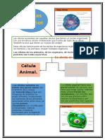 Bilogia_Celulas_Eucariotas