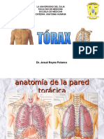 Anatomia de pared toracica.ppt