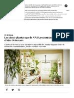 Las Cinco Plantas Que La NASA Recomienda Para Limpiar El Aire de Tu Casa