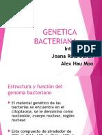 GENETICbac.ppt