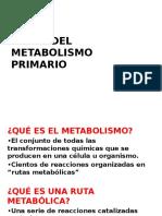 1. Bases Del Metbolismo Primario