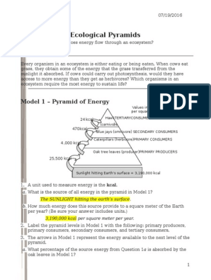 26 Ecological Pyramids S Rennel Biomass Ecology Food Web