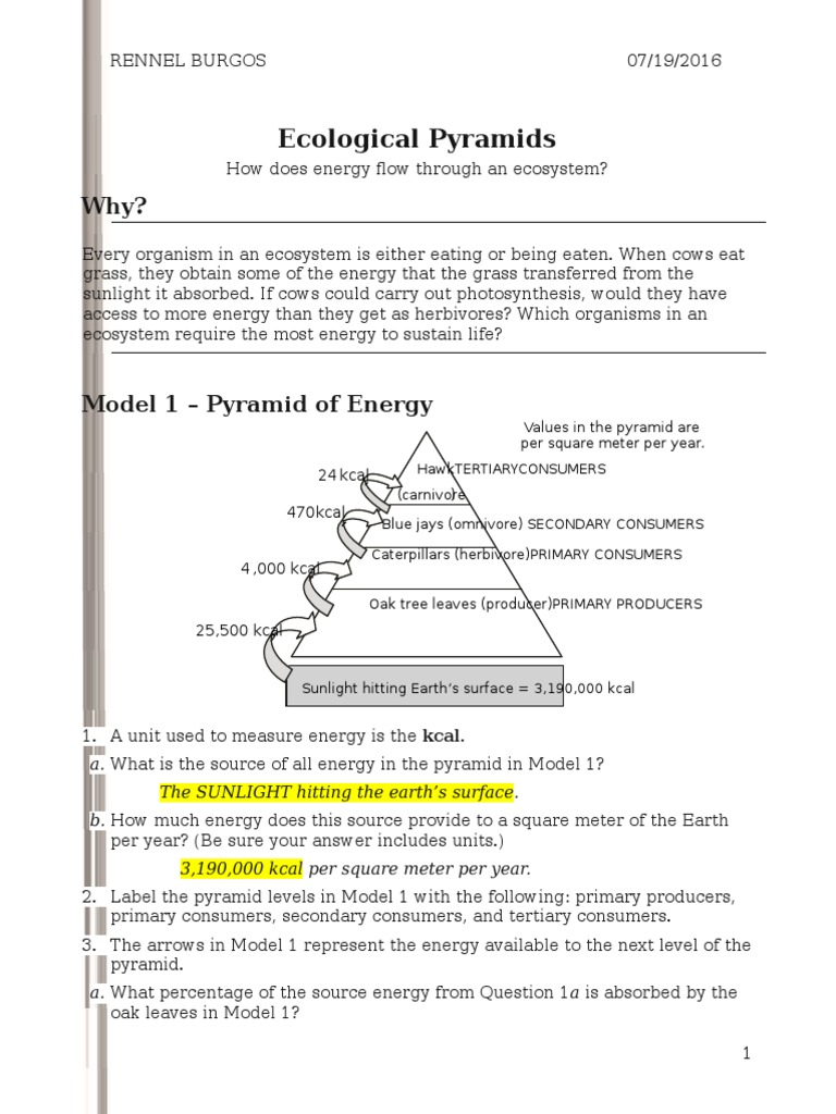 26 ecological pyramidss rennel Food Web – Ecology Worksheets for High School