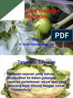 Budidaya Tanaman Sayuran Iwan-1