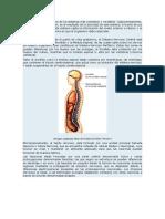 El Sistema Nervioso Es Uno de Los Sistemas Más Complejos y Versátiles