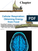 respiration (1).pptx