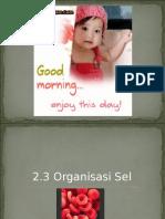 2.3 Organisasi Sel