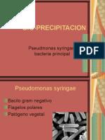 Bio Precipitacion