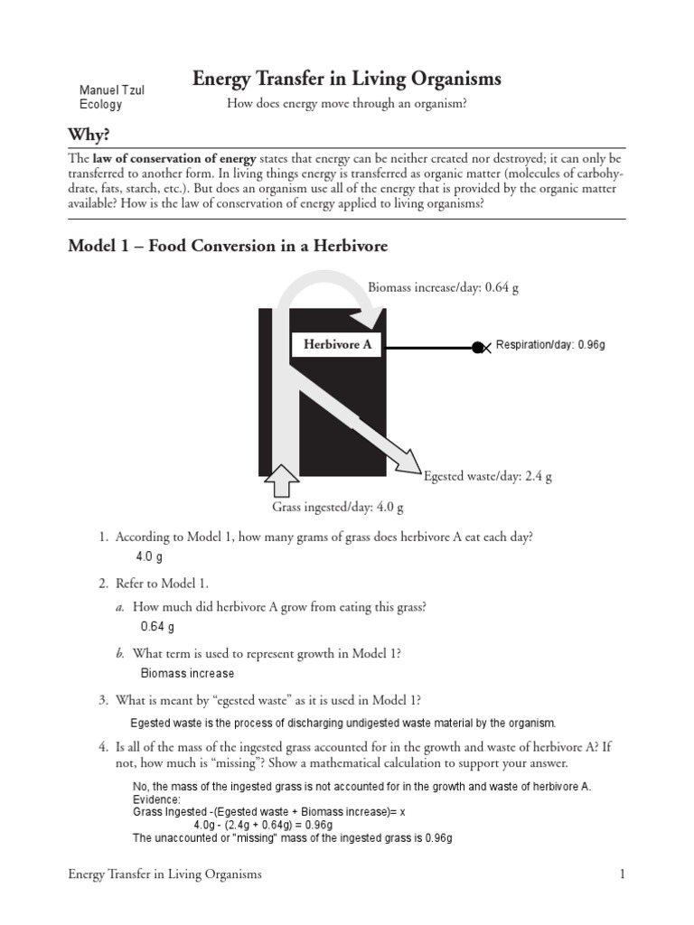 worksheet Energy Transfer Worksheet 25 energy transfer in living organisms swith manuel tzul cellular respiration nature
