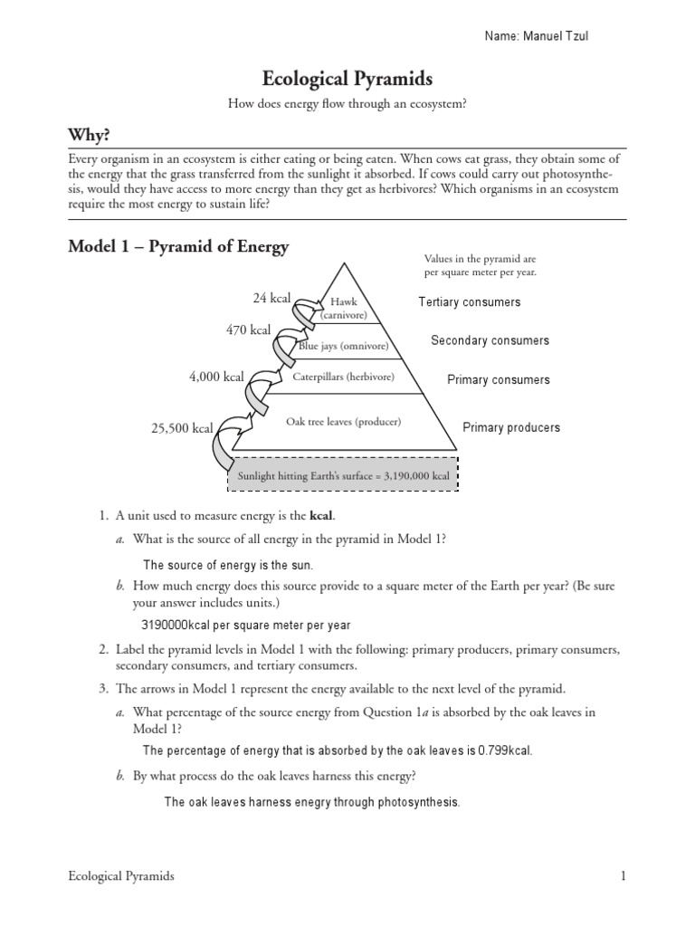 Pyramids Worksheet Switchconf – Ecological Pyramids Worksheet