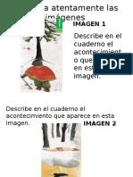 Lectura El Árbol Del Pehuén