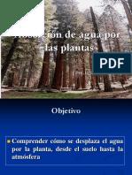 Absorcion y Transporte de Agua en La Planta LF