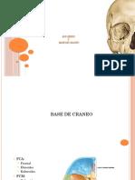 Fosas-Craneo