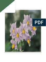 Flower 08
