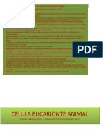 Célula Eucarionte Animal