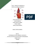 Trabajo Colaborativo 3 de morfofisiolgia