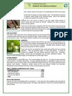 Walnut and Hazelnut Production
