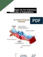 Embriologia Musculo