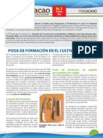 Boletin Infocacao No 3 Poda de Formacion en El Cultivo de Cacao