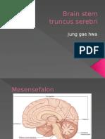 Brain stem - Copy.pptx
